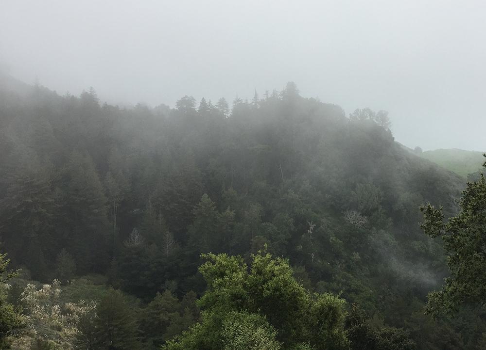 Nepenthe Fog