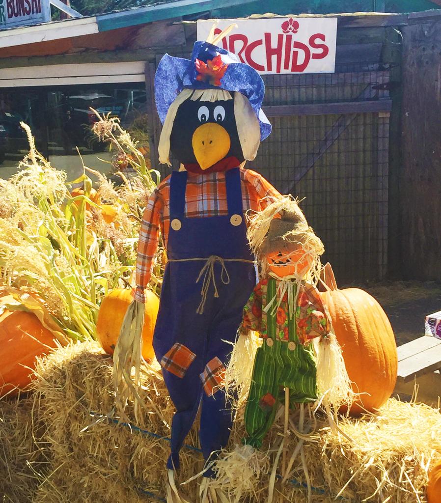 Hacienda Scarecrow
