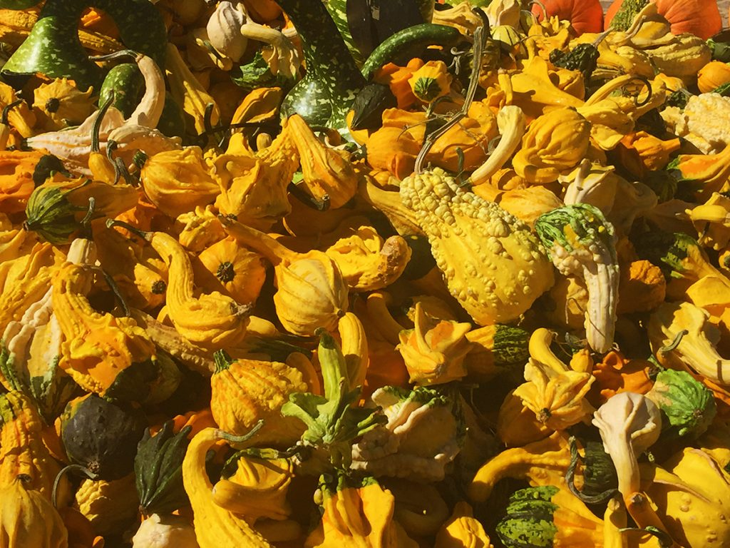 Carmel Valley Gourds