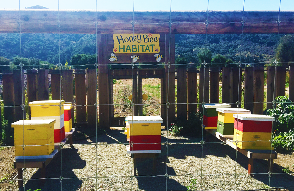 Earthbound Farm Honeybee Habitat